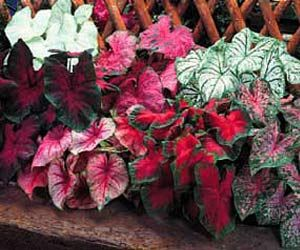 Annual Color Beds For Shady Properties