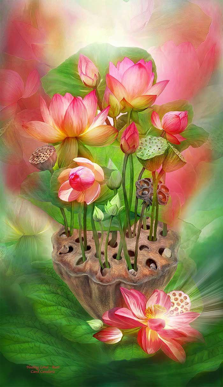 Healing Series Healing Lotus Root Art Pinterest Lotus 2d And