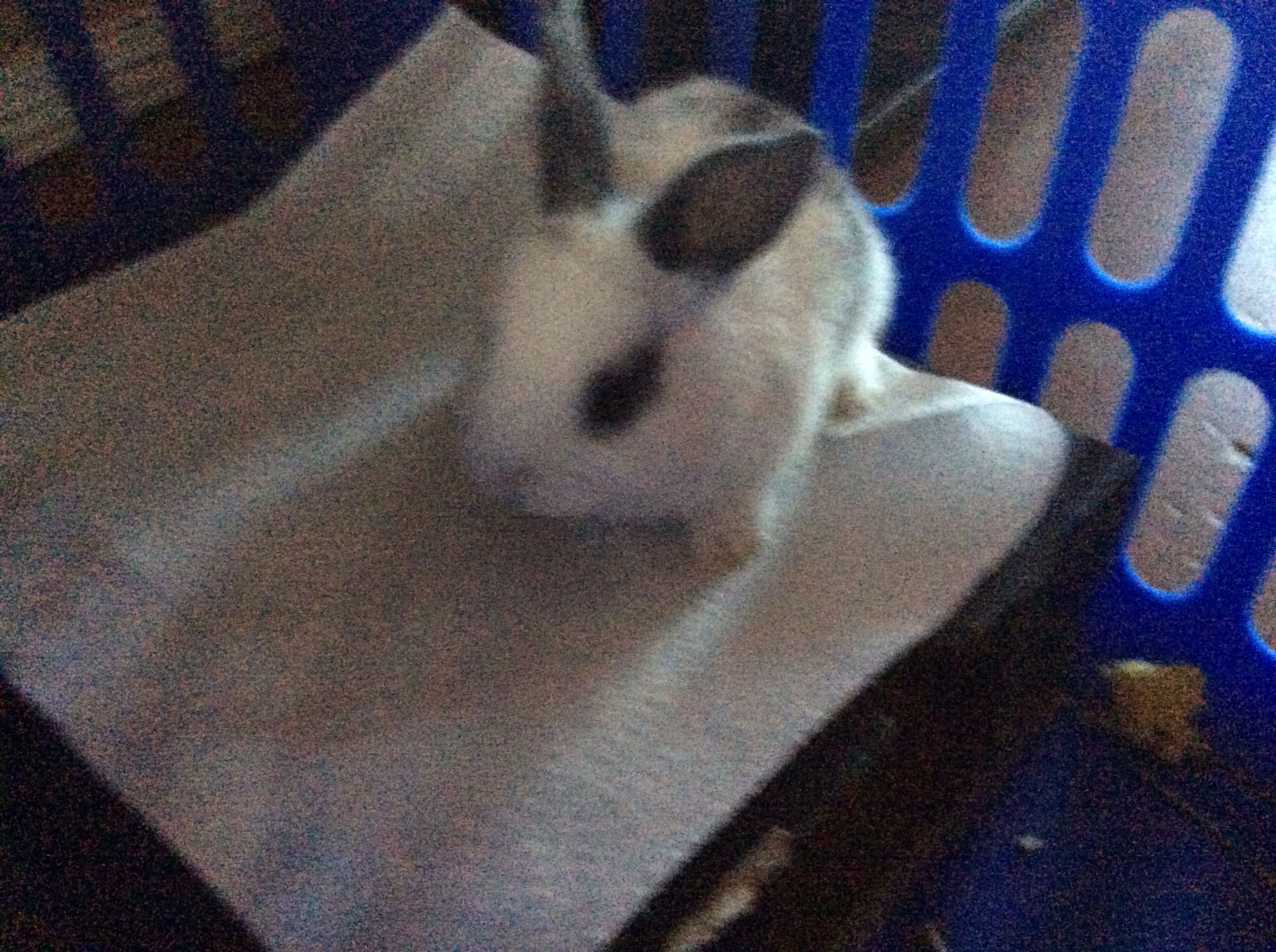 My new cute baby rabbit