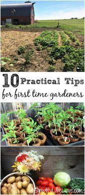 Gärtnern zu Händen Greenhorn leichtgewichtig gemacht Wenn Sie Ihren ersten Gr... -