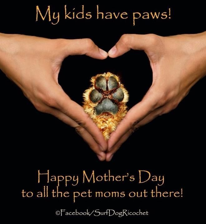 Happy mother's day to dog moms!! | Greetings from the furbabies