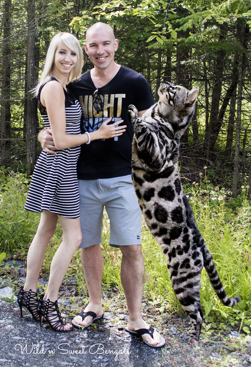 Family photo with our big silver charcoal bengal cat! More