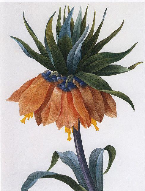 PEONIES /& CROWN IMPERIAL FLOWER WATERCOLOR PAINTING ART REAL CANVAS GICLEEPRINT