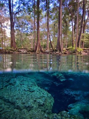 Dogwood Spring, part of Ginnie Springs, Gilchrist County ...