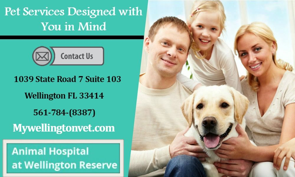 Affordable pet boarding services in wellington pet