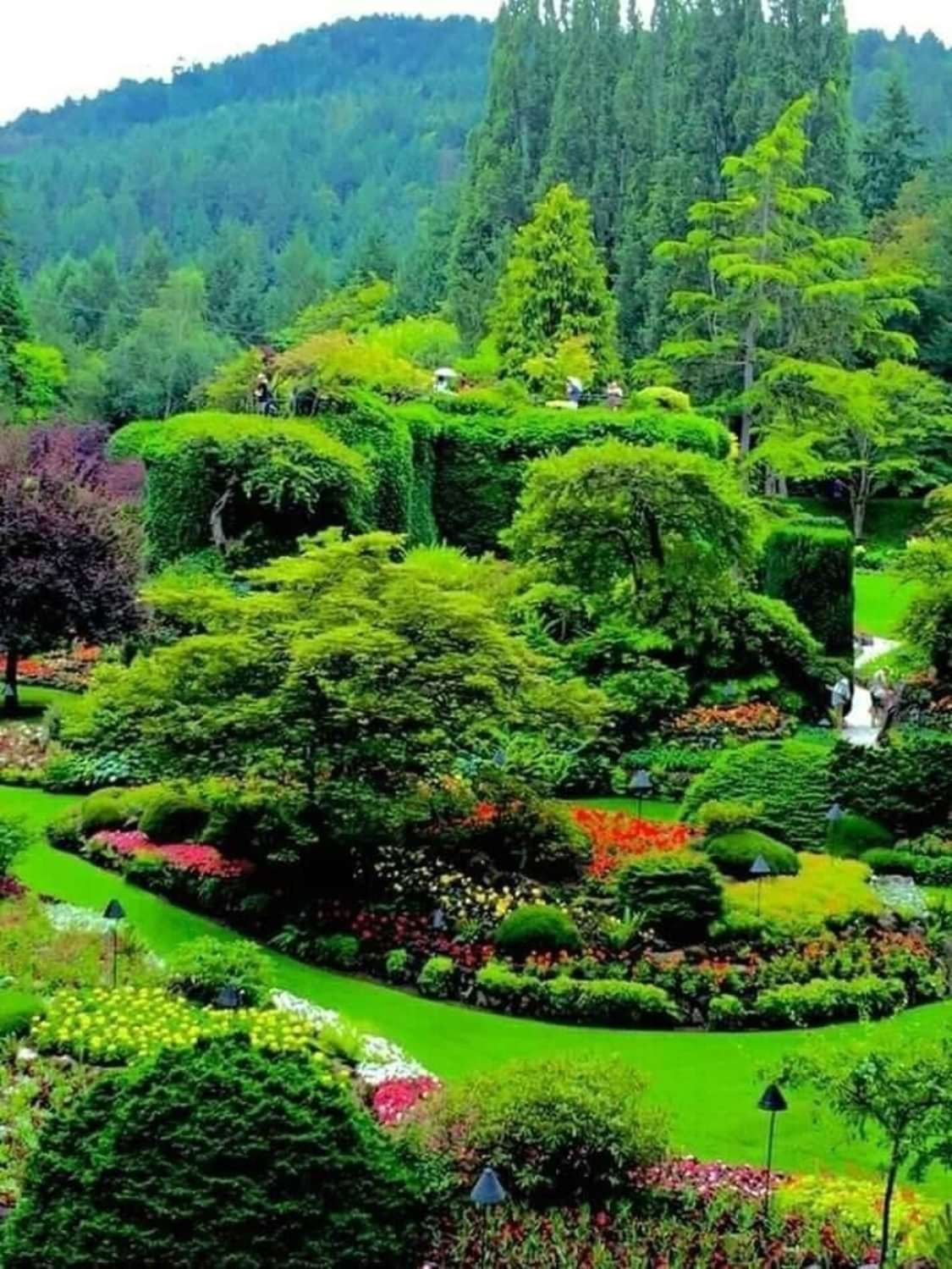 Beautiful nature attraction 🥰 ️ ️ Butchart gardens