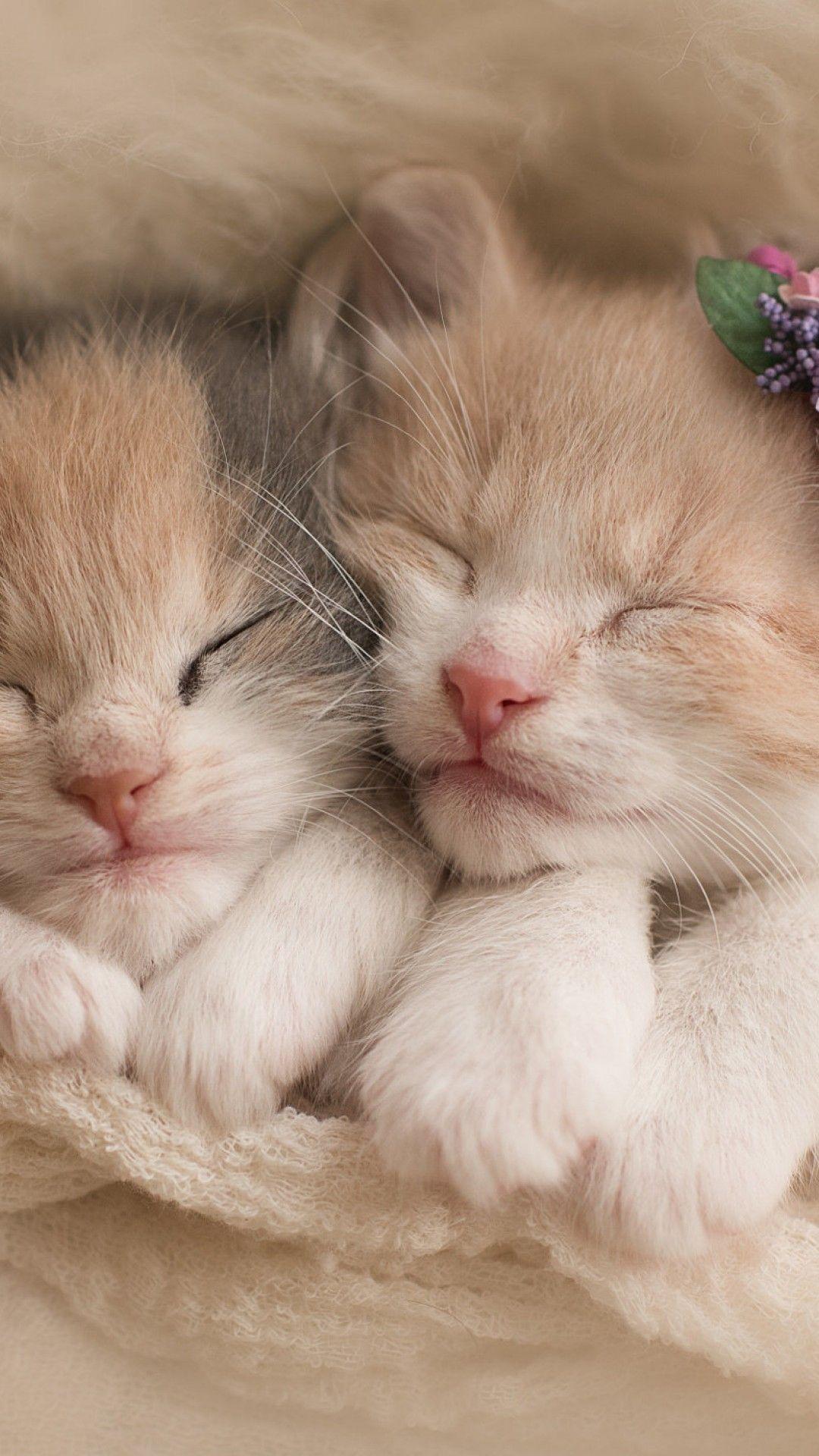 Kitten Cat Iphone Background In 2020 Kitten Wallpaper Cats And Kittens Iphone Background
