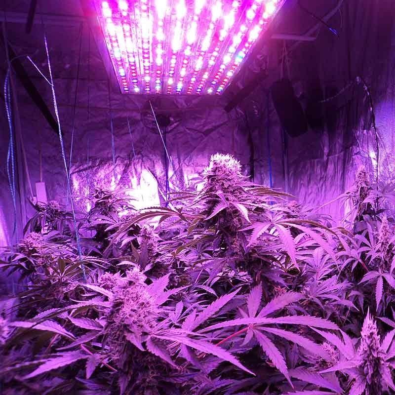 Марихуану через лед музей марихуаны гашиша и конопли
