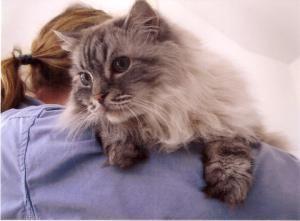 Adopt Jean Luis On Dog Lovers Pet Finder Ragdoll Cat