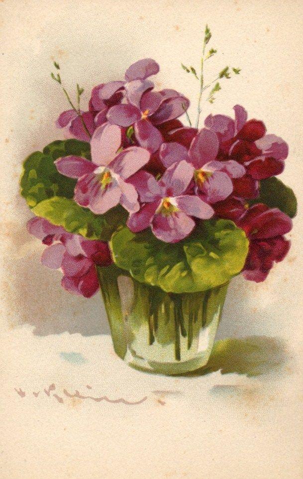 Vintage Postcard Violets By Catherine Klein Avec Images