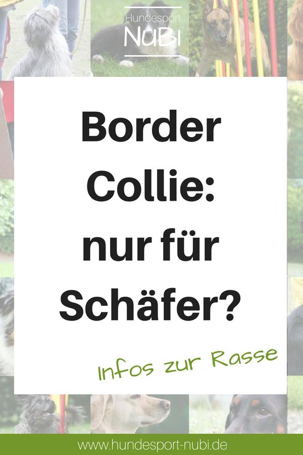 Border Collie Sportlicher Hutehund Hunderassen Hunde Rassen Border Collie Training