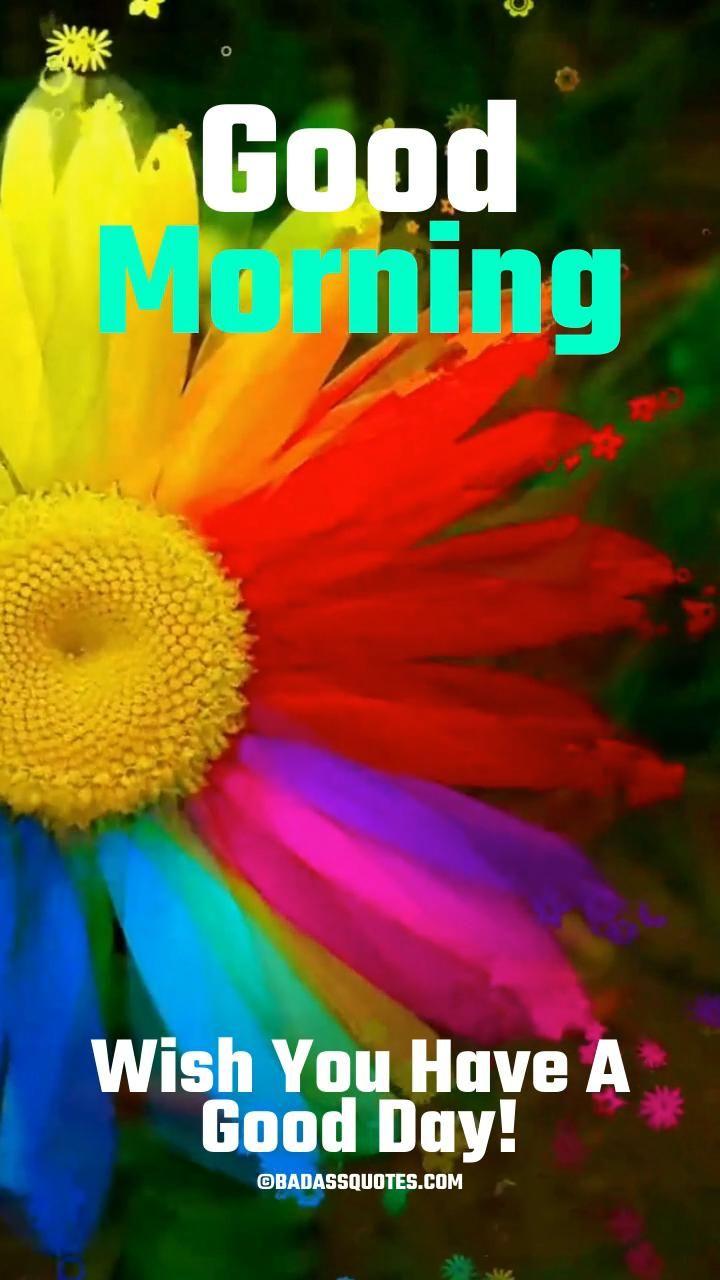 Beautiful Good Morning Video & Gif