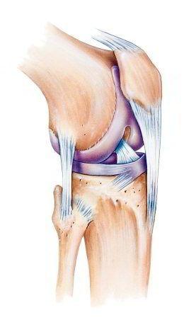 Knieschmerzen können auf Grund des komplexen Aufbaus des Knies viele ...