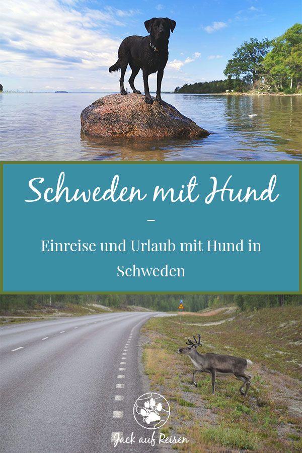 Schweden mit Hund – Einreise und Urlaub mit Hund in Schweden