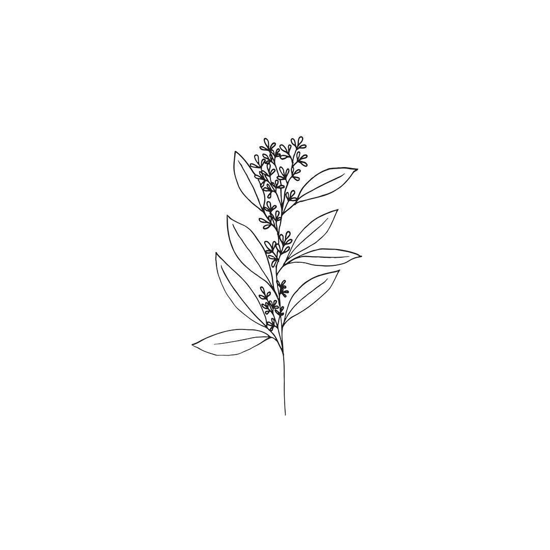 """145 Me gusta, 5 comentarios - @gooseberrymoon en Instagram: """"A little botanical sketch"""""""