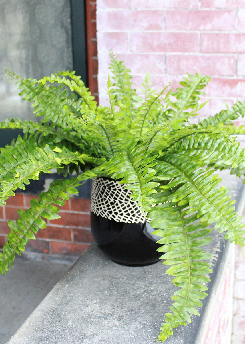 Uv protected plastic outdoor boston fern bush in green 18 boston uv protected boston fern bush in green outdoor artificial plants 18 tall mightylinksfo Choice Image