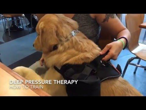 Service Dog Task Training Deep Pressure Therapy Dreamk9 Com