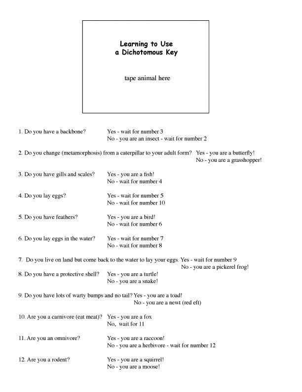 Dichotomus Key Elementary Biology Taxonomy Scientific Classification Dichotomous Key Science Teaching Resources Elementary Biology Dichotomous key worksheet