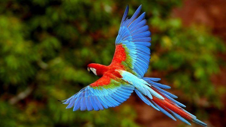 Картинки красивые птицы (35 фото) | Uccelli esotici ...