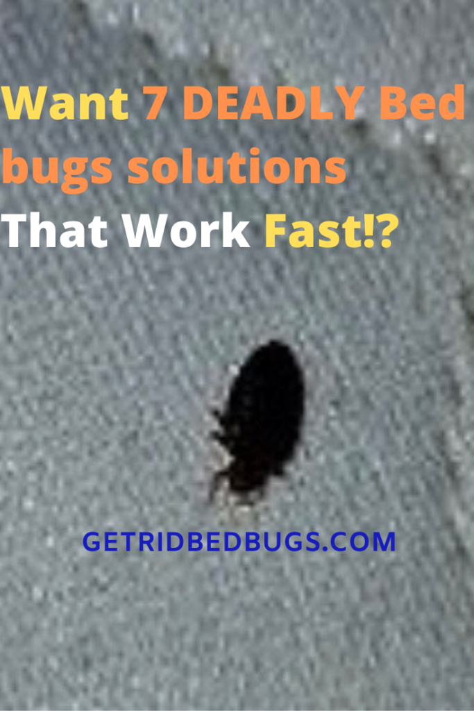 Bed Bugs Solution That Actually Works Top Methods To Eradicate