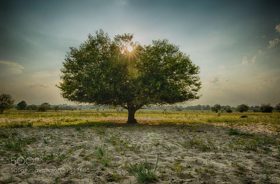Lonely Tree by CosminPlacinta. @go4fotos