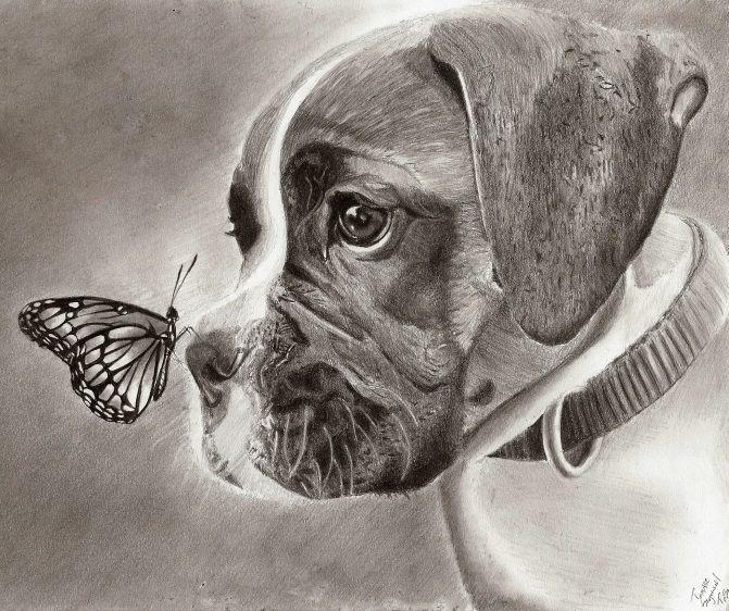 Dog And Butterfly By Teszu Deviantart Com On Deviantart Dog Art