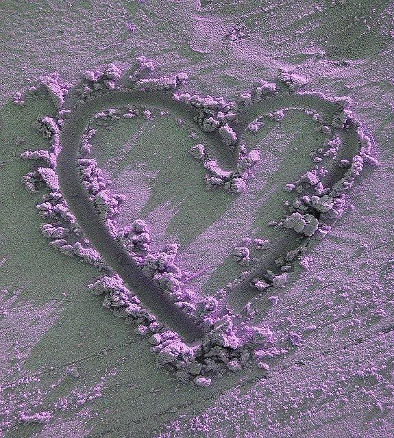 Purple Heart #purple