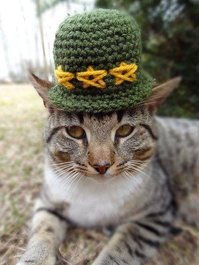 Cats in hats. Animais FofosMoldeChapéus ... b9dda0240b0