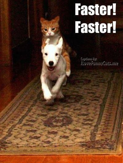 Pet Lovers Community Animaux Mignons Animaux Droles Comme