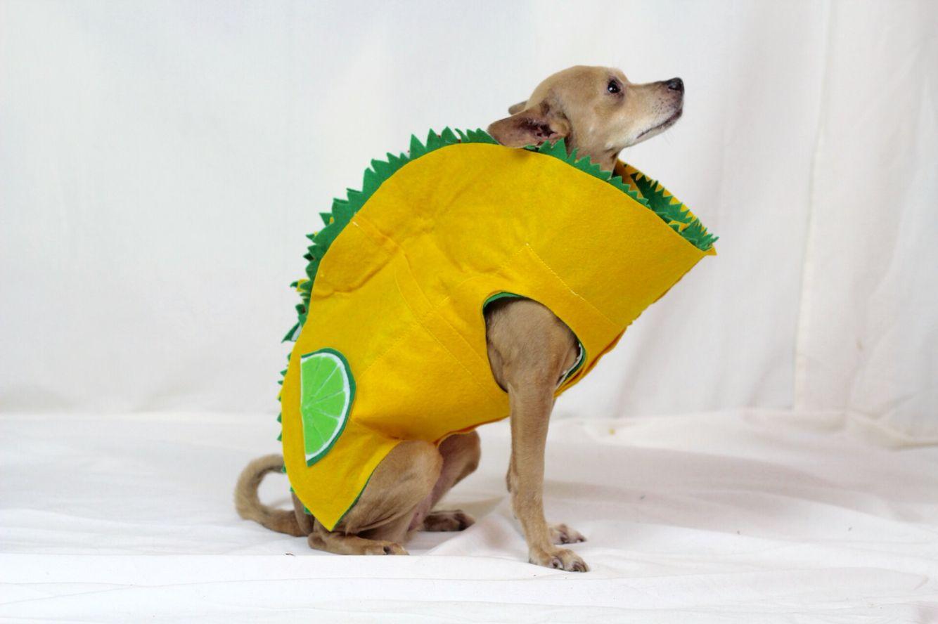 Way to Celebrate Halloween Taco Dog Costume, X-Small ... |Taco Dog Halloween Costume Pattern
