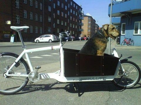 Skipper The Dog In A Cargo Bike Bullitt Cargo Bike Cargo Bike Biking With Dog