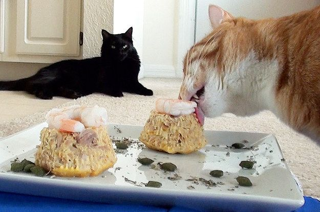 We Celebrated Marmalade S First Birthday By Baking Two Tuna Cat Cakes A Very Simple Friendly Recipe And Marm Loved Them