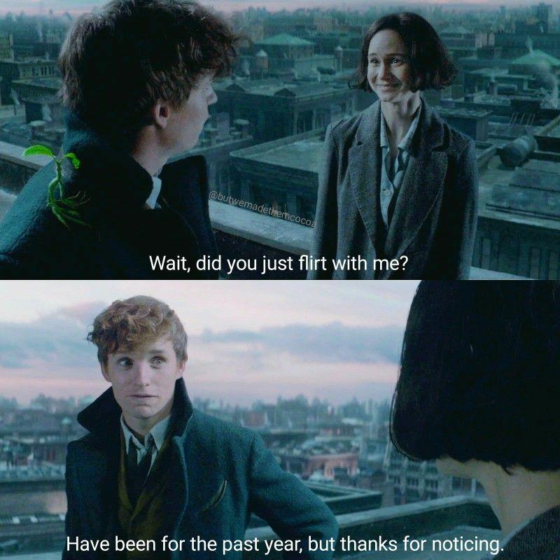 Newtina Au Fantastic Beasts Movie Harry Potter Fantastic Beasts Fantastic Beasts