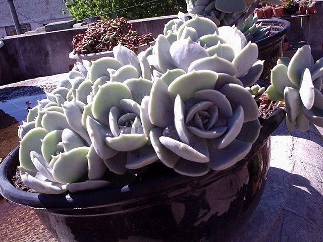 Succulent Gardening, Garden Planning, Exotic Plants, County Fair, Cactus,  Garden Ideas, Bellisima, Succulents, Succulent