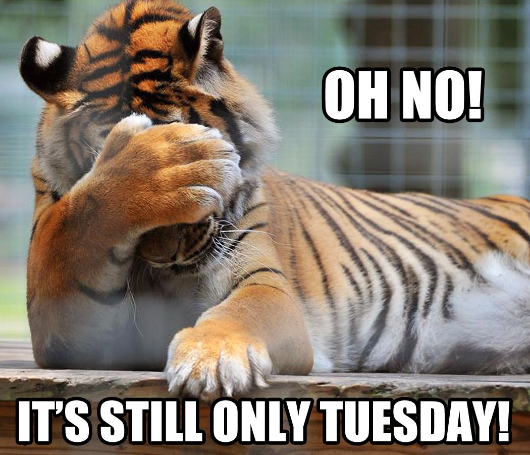 Tuesday blues... (With images) Tuesday quotes funny