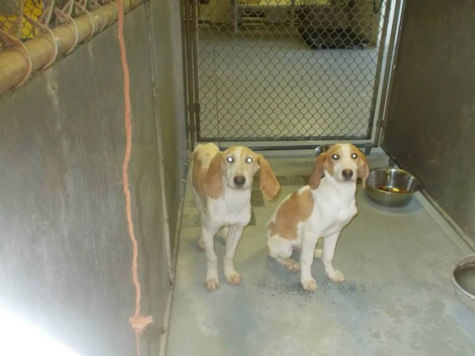 17++ Cabell wayne animal shelter ideas