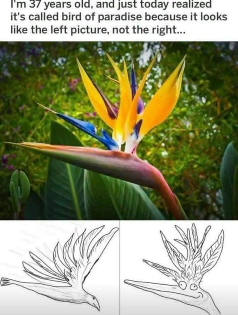 100 Today S Most Funny Memes Funnyfoto Birds Of Paradise Funny Birds Best Funny Photos