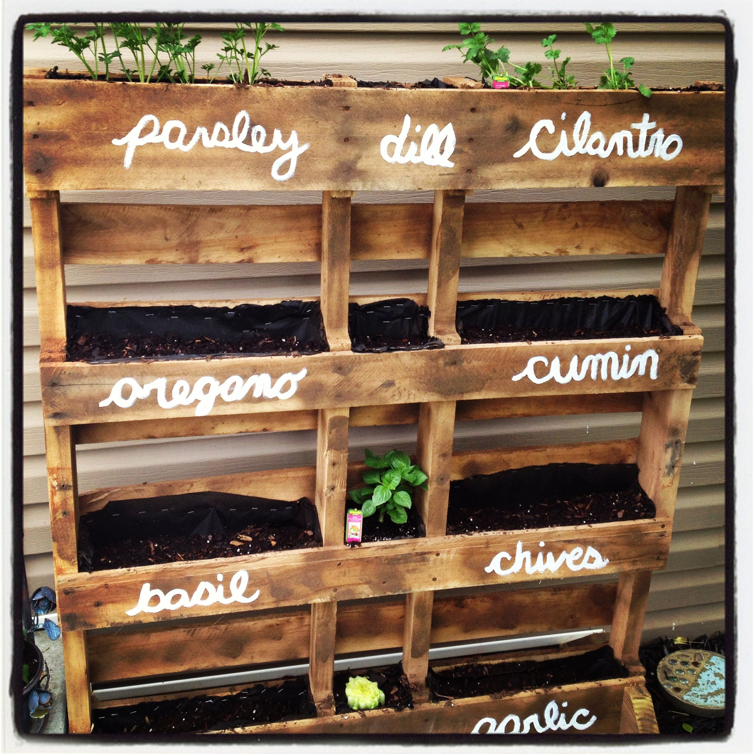 my pallet herb garden Josh made me...still have a few more