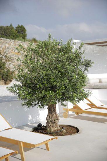 Photo of Maison Kamari sur l'île de Paros – Turbulences Déco
