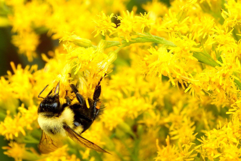 Fine Art bee photography \
