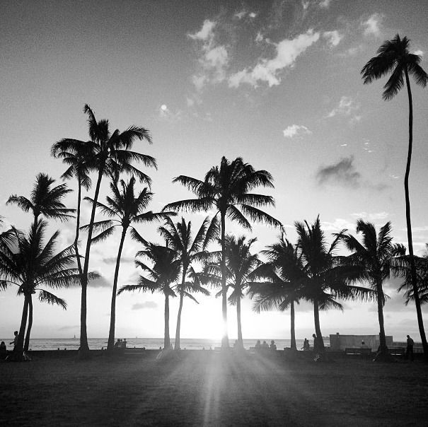 tumblr palm trees black and white Google zoeken (With