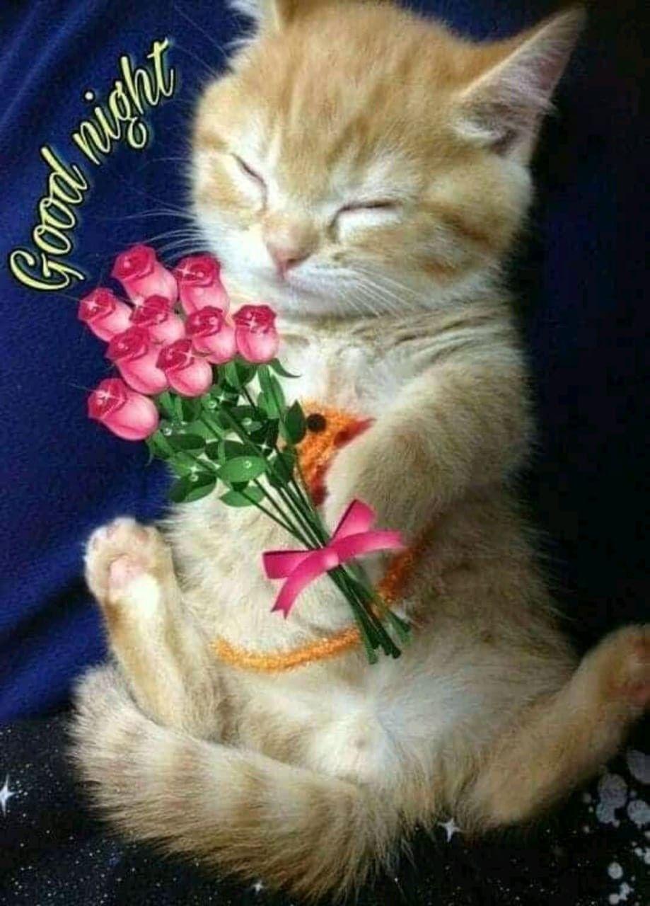 Good Night Friends Good Night Greetings Good Night Cat