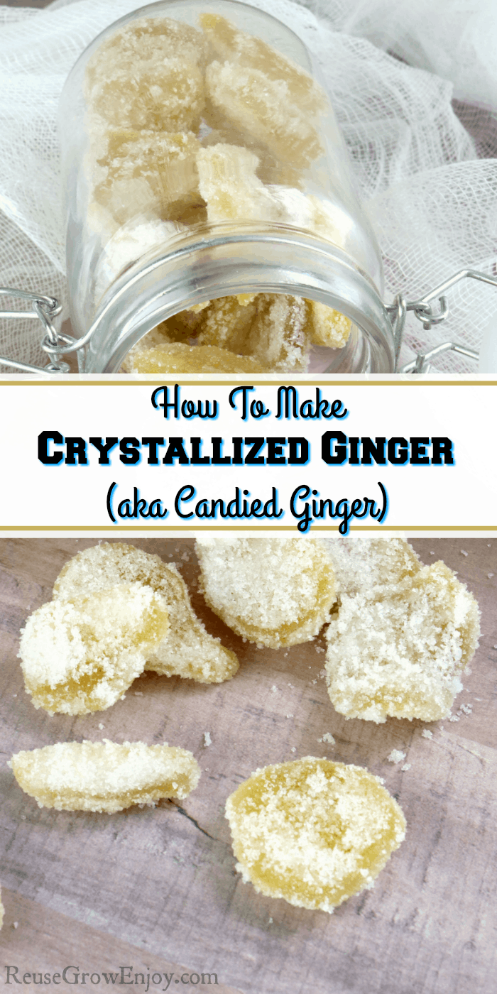 Like Candied Ginger Or Crystallized Ginger You Can Make Your Own Right At Home I Will Show You How I Candied Ginger Crystalized Ginger Recipe Ginger Recipes