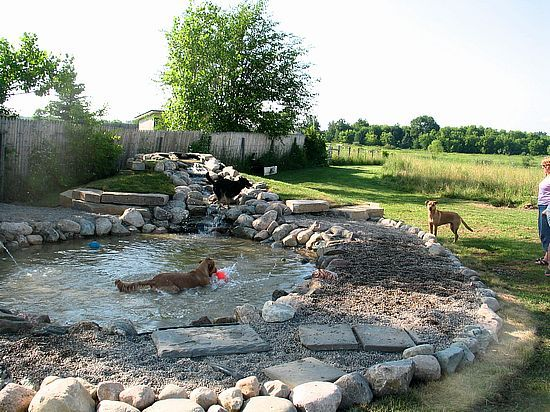 Built to be a pond for dogs great planning dream house for Garden pool for dogs