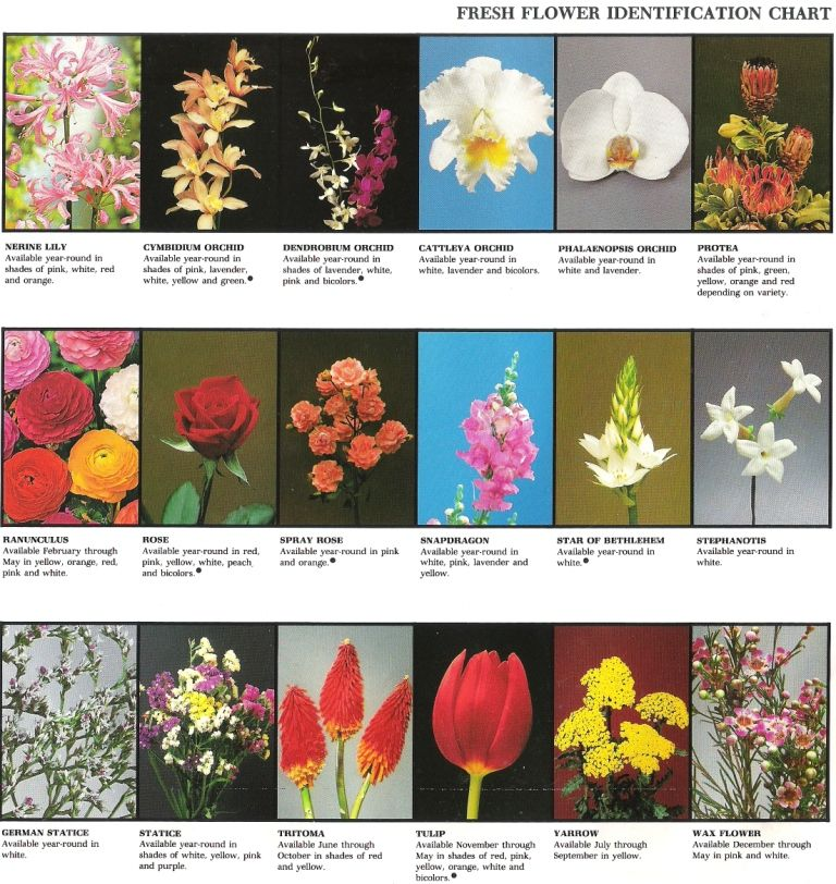 Fresh flower identification chart be great printout with cards fresh flower identification chart be great printout with cards students could then access in class instead of getting online mightylinksfo