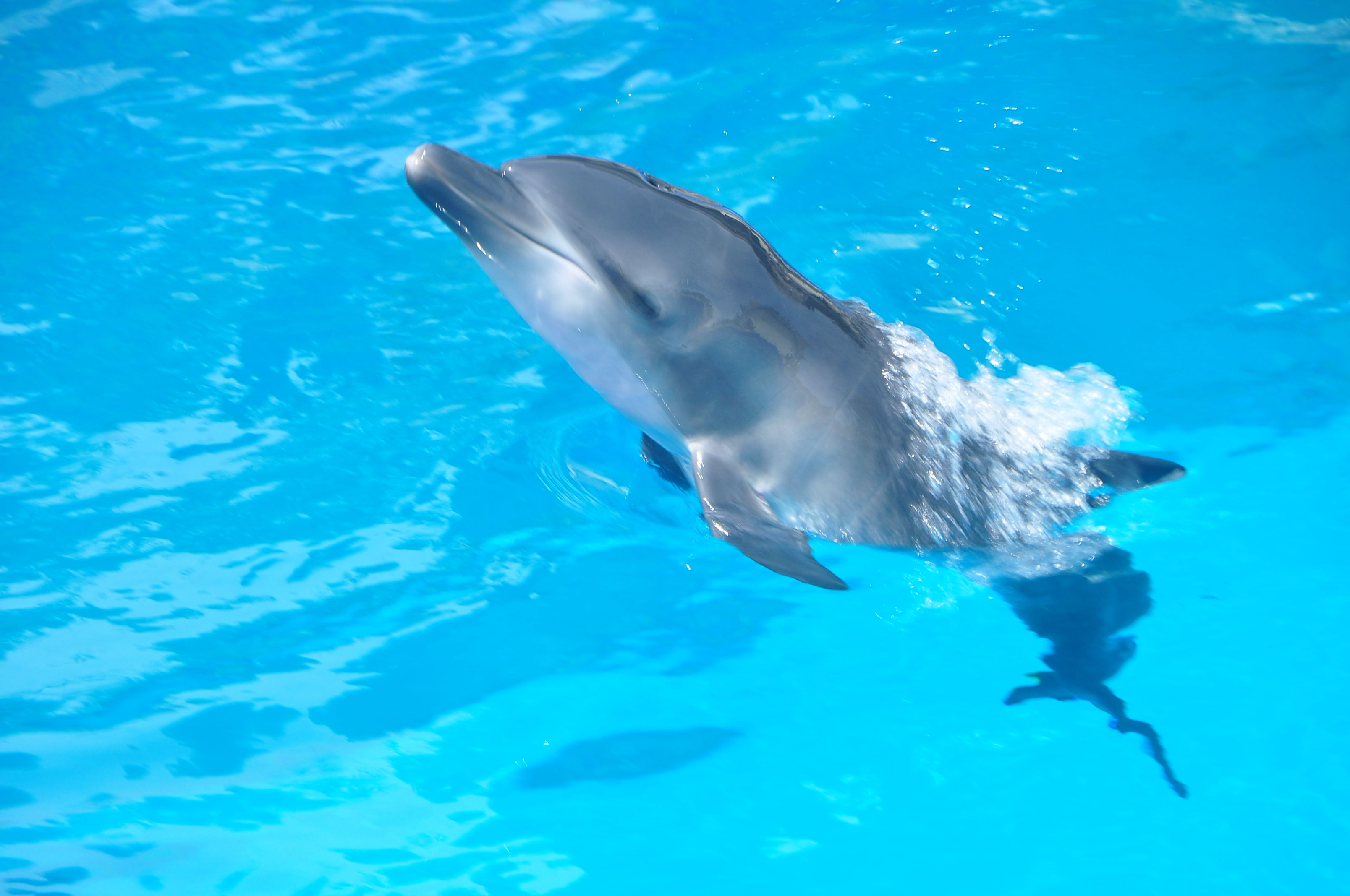 images of baby dolphins - photo #10