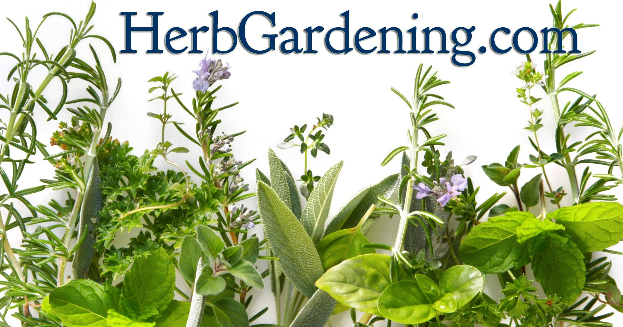 Grow Herbs For Fun And Profit Growing Herbs Herbs Indoors