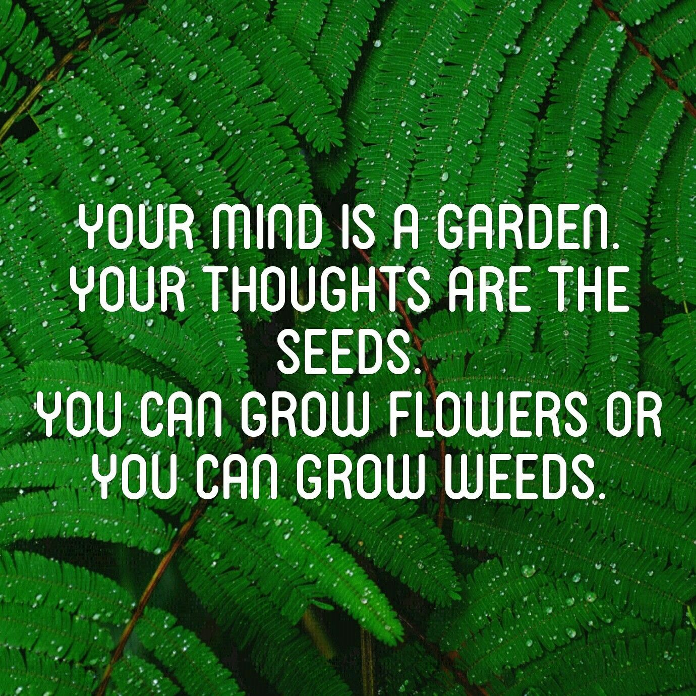 Your Mind Is A Garden. Your Thoughts Are The Seeds. You