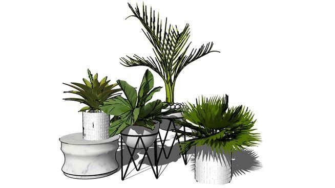 Plant 30 3d Warehouse Sketchup Soft Decor