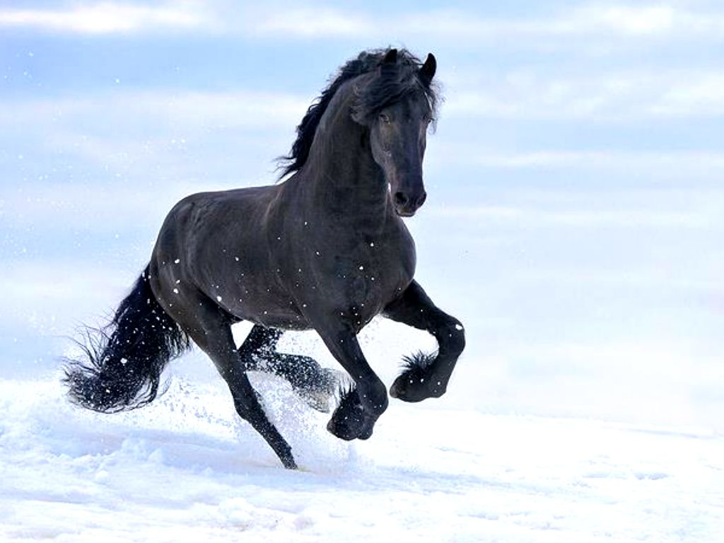 Amazing Wallpaper Horse Snow - 8bc78921465f6dcd92f8988221f49ef7  Collection_59871.jpg